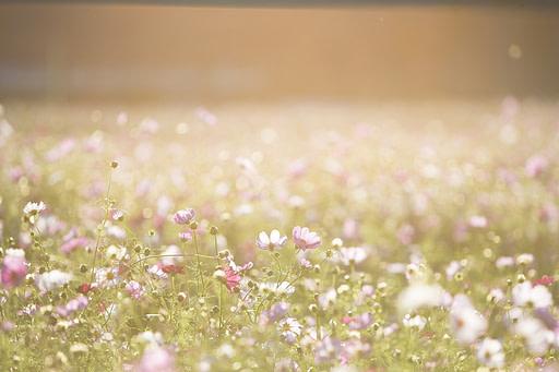 Fleurs des champs cosmétique naturel La Mauve