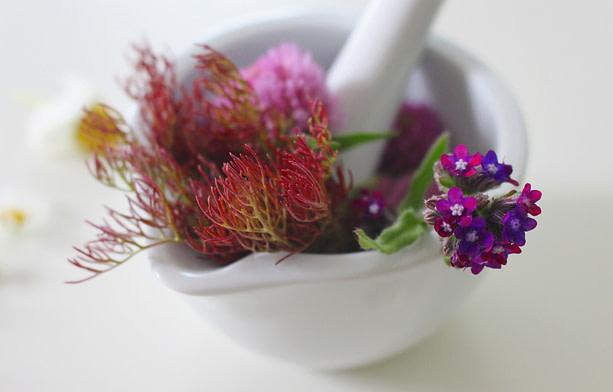 medicinal flower 4246074 1920